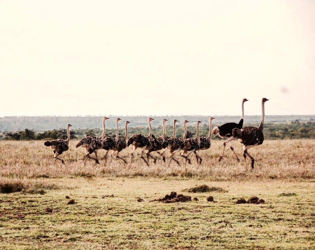 Đưa nhau lên... tổ chim để xa lánh thế giới loài người