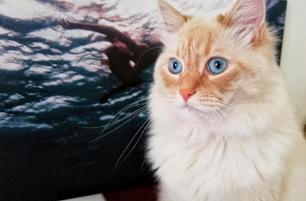 Chú mèo có cuộc sống mộng mơ như... công chúa Disney