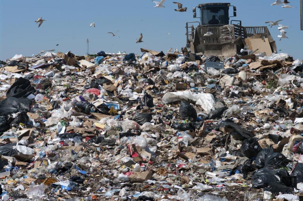 Loài giun ăn rác thải nhựa có thể là cứu tinh cho Trái Đất trong tương lai