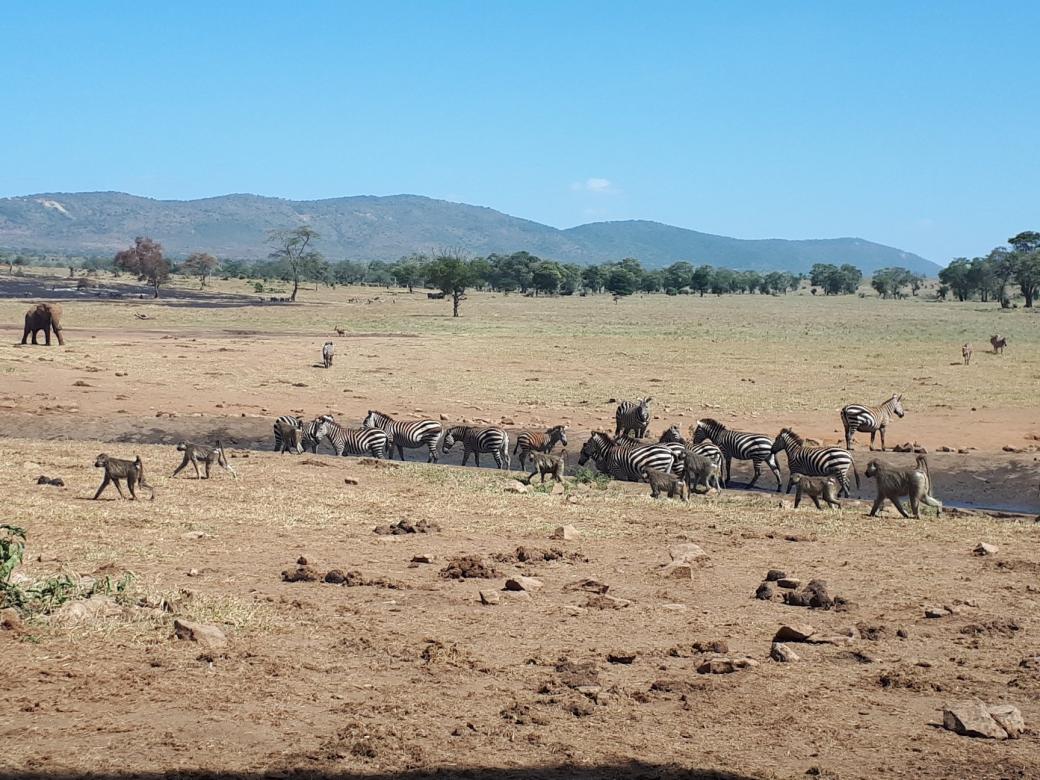 Nông dân châu Phi xả hàng ngàn lít nước sạch cứu động vật hoang dã suýt chết khát vì hạn hán