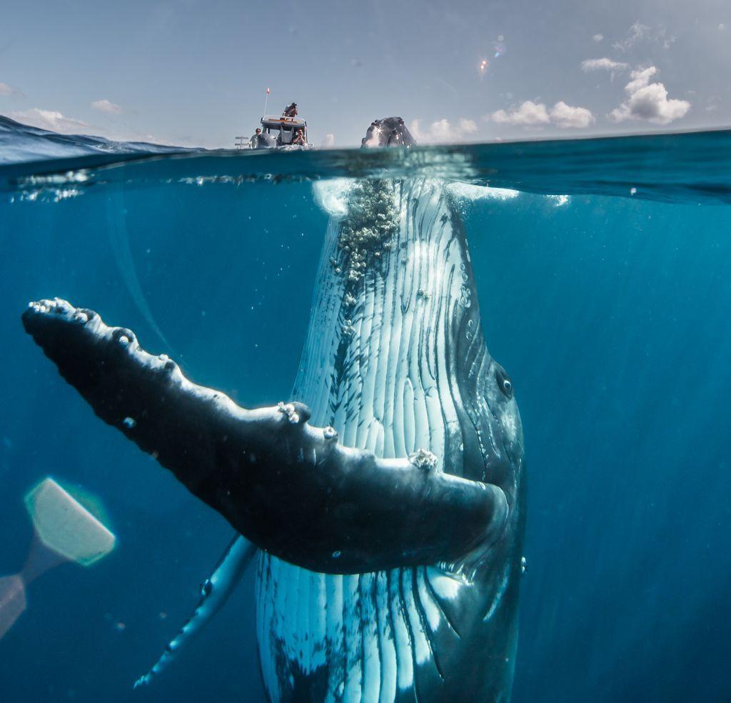 Nghẹt thở trước vẻ đẹp của thiên nhiên qua loạt ảnh dự thi Nat Geo Travel 2019