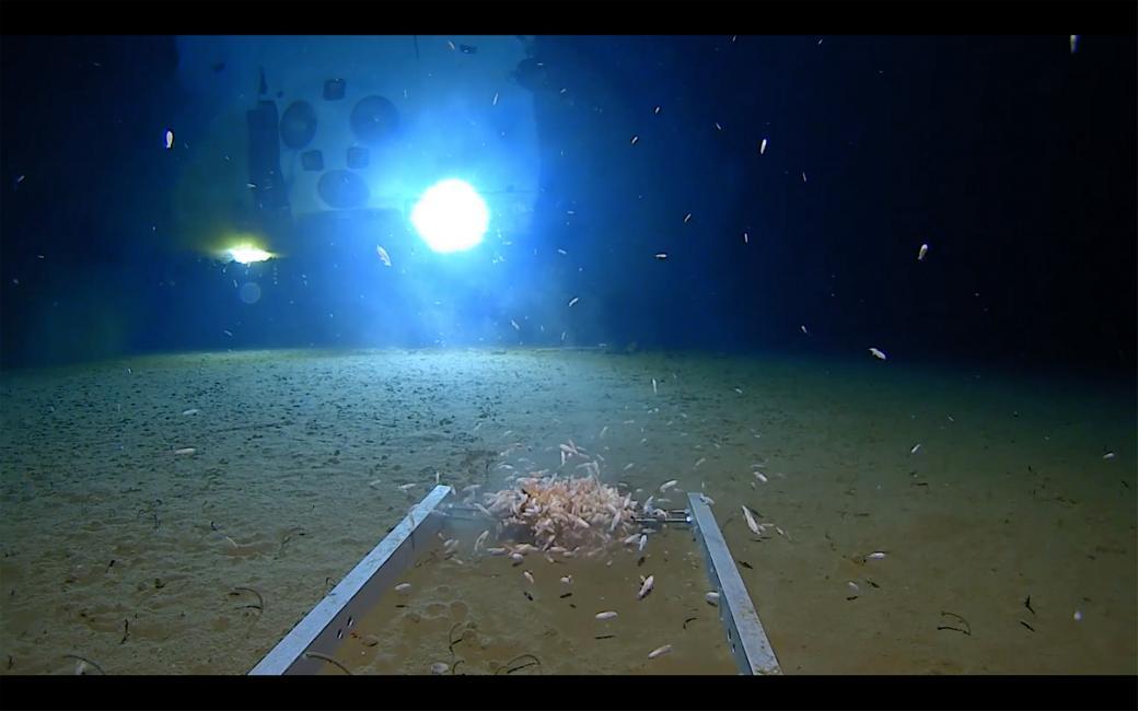 Quang cảnh nơi sâu nhất thế giới ở đáy Thái Bình Dương