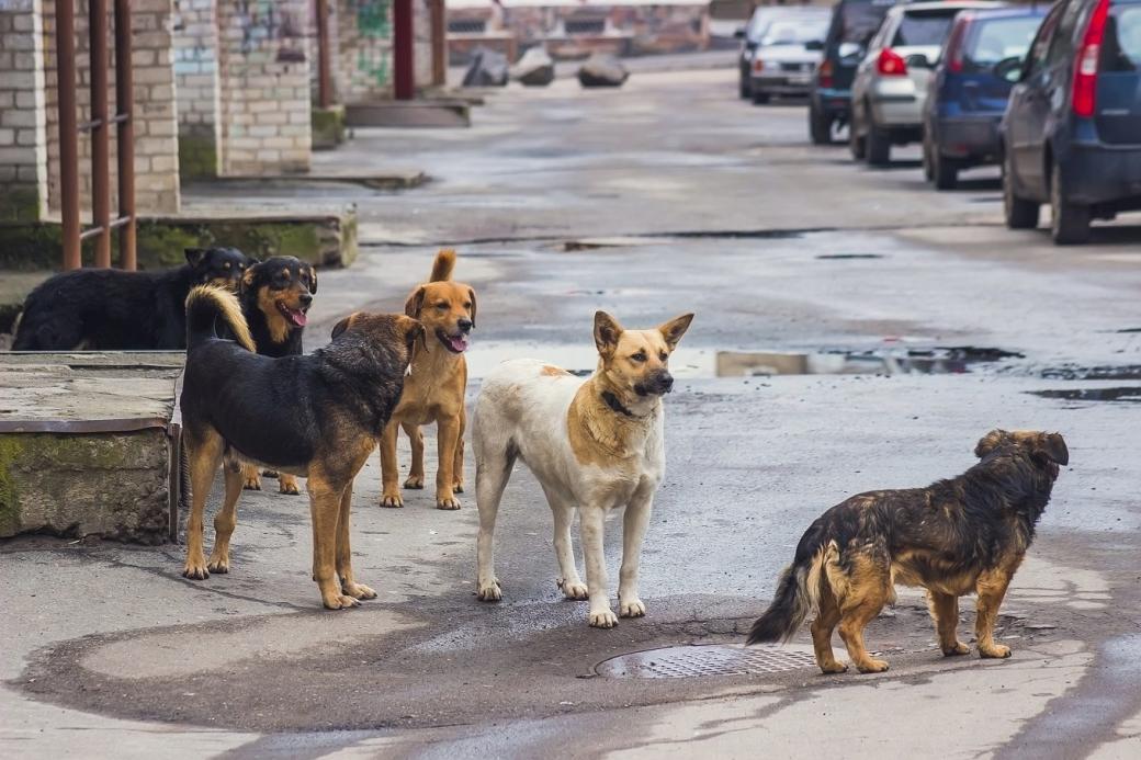 Hà Lan trở thành quốc gia đầu tiên không còn chó lang thang và hành trình mà họ tạo ra kỳ tích