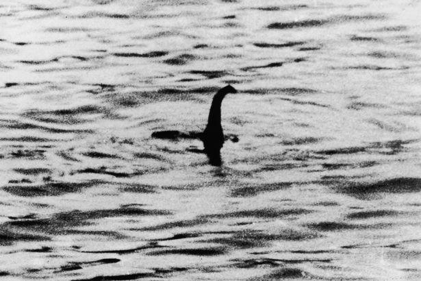 Hoá thạch 70 triệu năm tuổi nghi ngờ của 'quái vật hồ Loch Ness đời thực' được tìm thấy ở Nam Cực