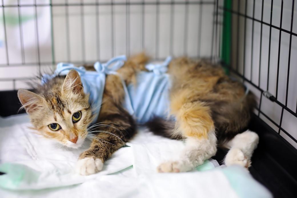 Những kẻ ngược đãi động vật có thể bị bóc lịch 5 năm trong tù theo dự luật mới ở Anh