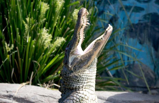 Cá sấu hay 'phê thuốc': Cảnh sát Mỹ yêu cầu người dân không xả 'mai thuý' xuống bồn cầu
