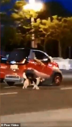 Chú chó bị kéo lê trên đường vì hết chỗ cho nó trong xe chủ nhân