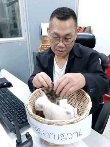 Sếp cưng mèo đến mức mang vào văn phòng chăm sóc khiến nhân viên cười thầm vì quá đáng yêu