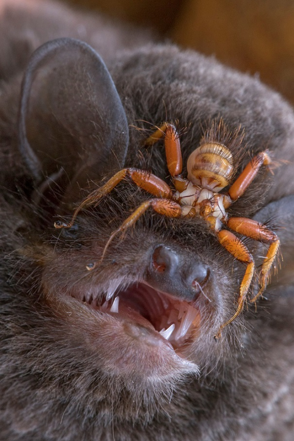Phim kinh dị là 'muỗi' so với loạt cảnh tượng hãi hùng dưới đây