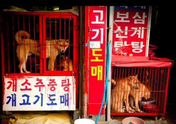 Thịt chó và Thế Vận Hội mùa đông 2018