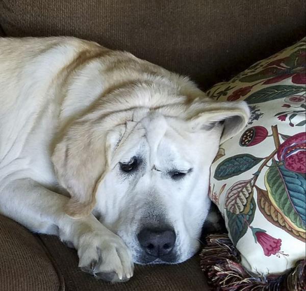 Câu chuyện cảm động về chú chó bị chủ bỏ rơi vì quá xấu xí