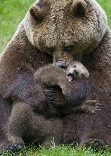 9 kiểu trông con 'chất nhất quả đất' của các bà mẹ động vật