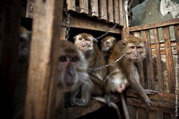 Sự thật tàn nhẫn đằng sau hình ảnh chú khỉ 'giả gái' đứng xin tiền bên đường