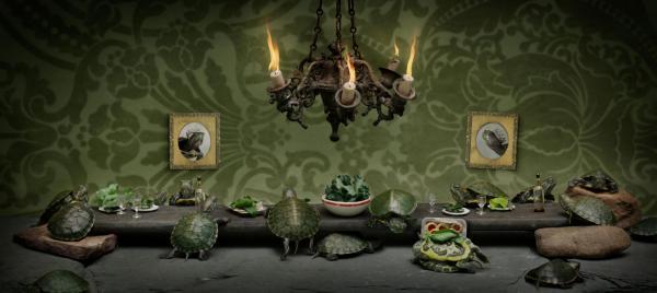 Nếu đặt các loài động vật vào bàn tiệc, chúng sẽ thưởng thức thức ăn như thế nào?