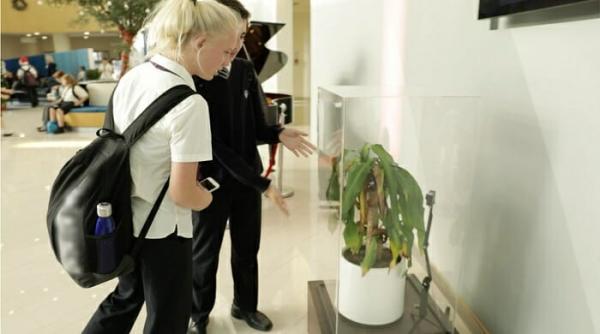 Chiến dịch chống bạo lực học đường của IKEA: Cho học sinh mắng chửi cây xanh trong 1 tháng và theo dõi kết quả