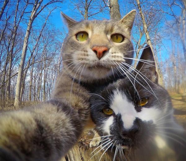 Anh chàng mèo 'sống ảo' suốt ngày selfie cùng hội chó bự