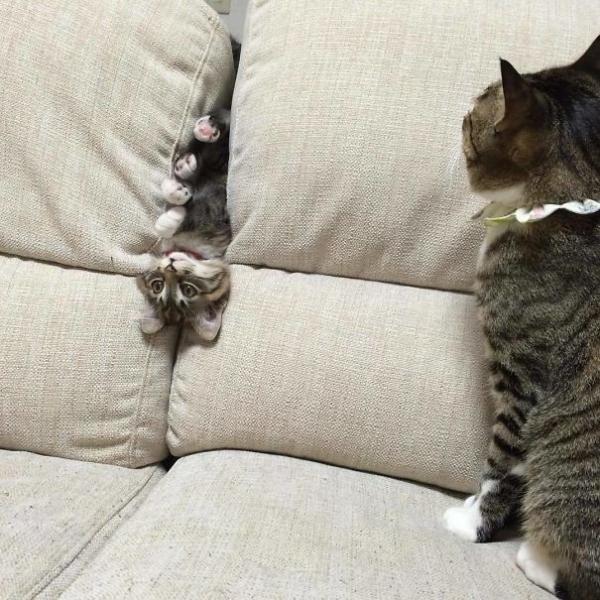 20 'quàng thượng' là nỗi thất vọng của loài mèo vì hành động hết sức ngốc xít