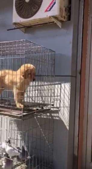 Da mèo được bày bán công khai tại chợ truyền thống Trung Quốc gây sốc