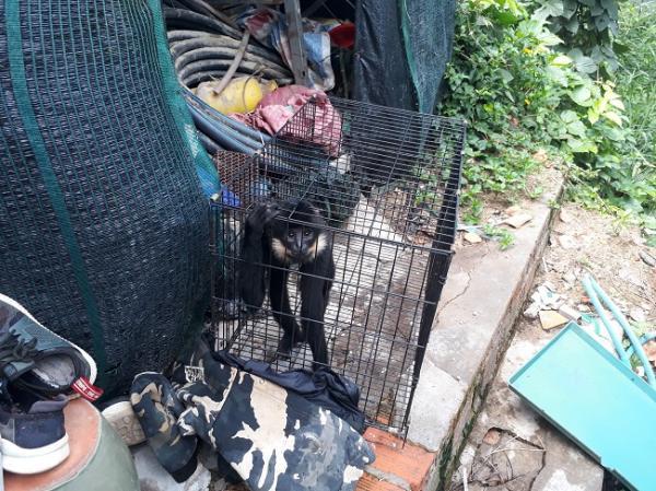 Khu du lịch ở Đà Lạt bị lên án vì lạm dụng động vật để thu hút khách