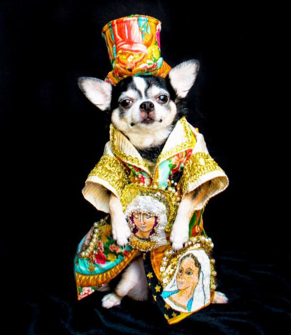 Met Gala phiên bản cún với trang phục thiết kế riêng cầu kỳ không thua gì người thật