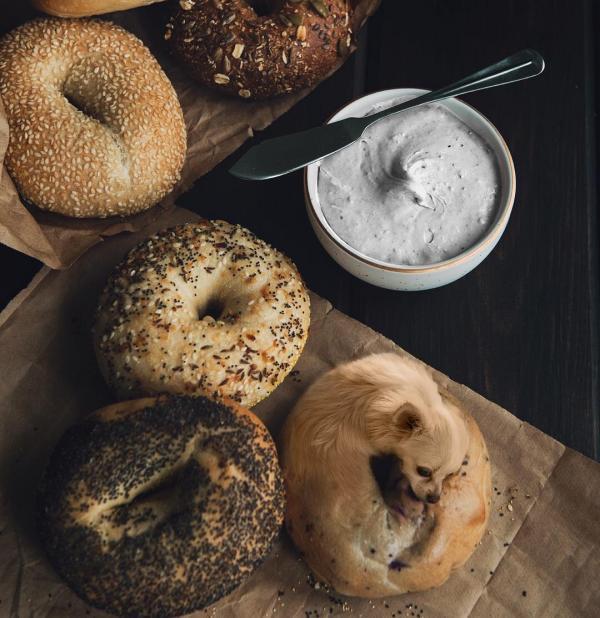 Công thức cún xinh và đồ ăn 'đốn tim' hàng ngàn người dùng Instagram