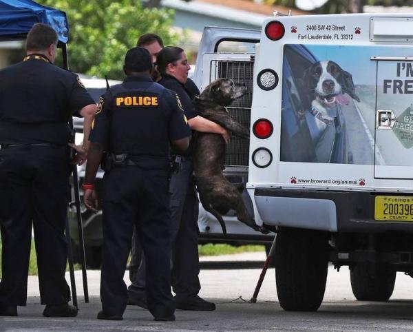 Chó pitbull nuôi trong nhà cắn chết bé gái 8 tháng tuổi