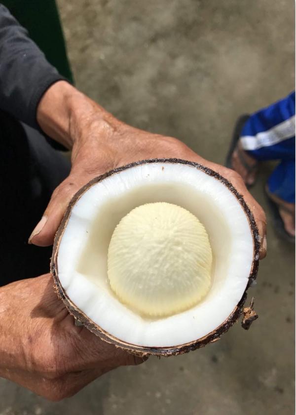 Đặc sản 'mộng dừa' miền Tây: Xưa vứt không ai thèm nhặt, nay lại tranh nhau mua