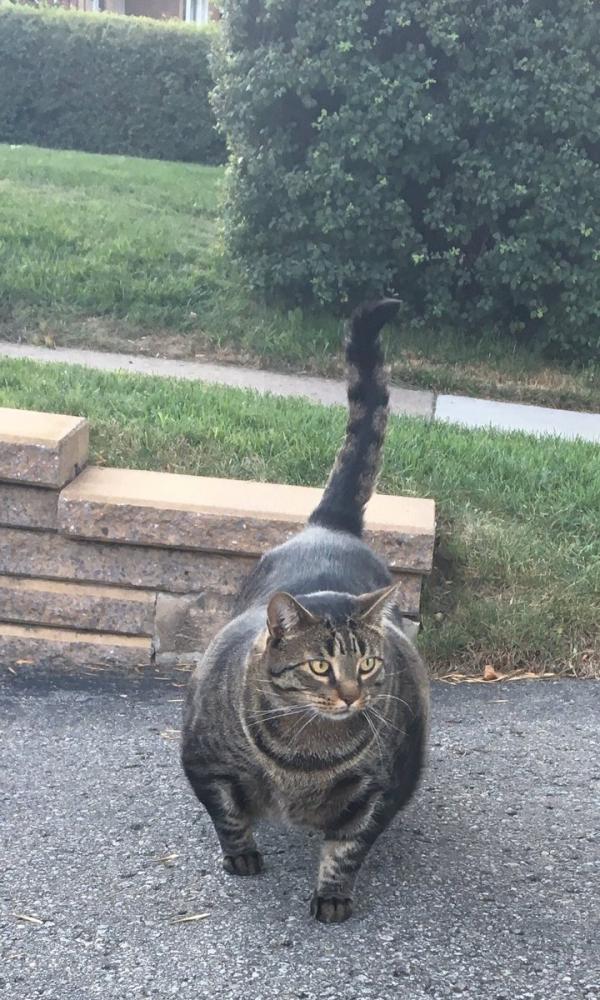 Chú mèo 'cơ bắp cuồn cuộn' trở thành meme hài hước của cư dân mạng