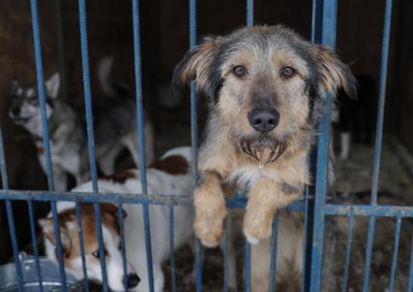 Nga ra chính sách 'thảm sát' tất cả chó hoang trước thềm World Cup 2018