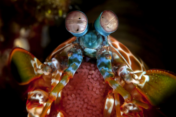27 loài động vật kỳ lạ 'không thể tin nổi' từng lọt vào ống kính máy ảnh