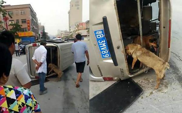 Người đàn ông cầm mã tấu đuổi theo xe trộm chó gây náo động đường phố