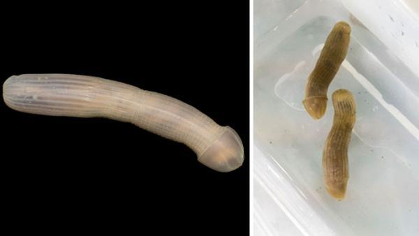 17 loài sinh vật bí ẩn tồn tại ở độ sâu 5000 mét dưới đáy đại dương