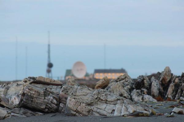 Tham ăn, một chú gấu Bắc Cực vượt biển vào bờ để chè chén say sưa trong đài phát thanh Na Uy