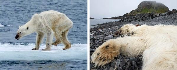 13 bức ảnh thiên nhiên ngỡ đơn giản nhưng lại ẩn chứa những câu chuyện đau lòng đến khó tin