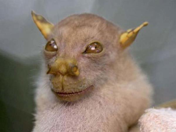 Những sinh vật có có hình dáng quái đản đến 'nhức mắt' người xem