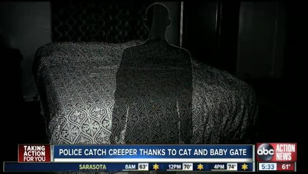 'Con sen chân chính' đột nhập vào nhà người khác và bị bắt vì... mải mê nựng mèo