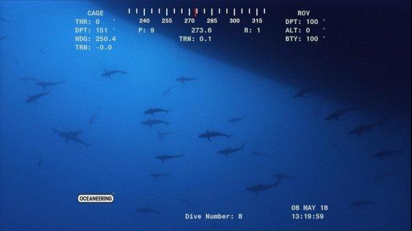 Loạt ảnh chân thực về những mối đe doạ đáng sợ ẩn mình dưới đáy đại dương