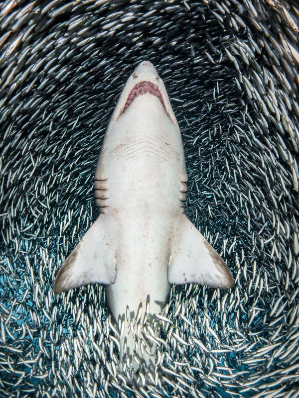 Loạt tác phẩm đẹp ngỡ ngàng đến từ cuộc thi Nhiếp ảnh dưới nước 2018