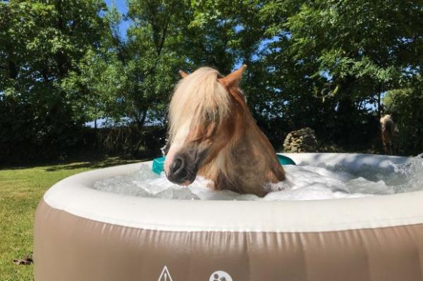 Vì mùa hè quá nóng, đến ngựa cũng được chăm sóc tại spa riêng