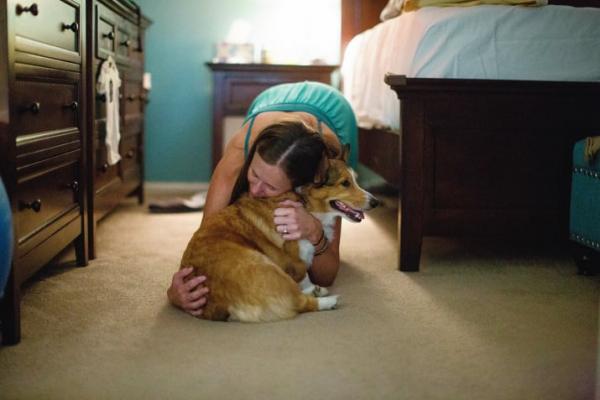 Cảm động chú chó Corgi biết giúp chủ của mình vượt qua cơn sinh nở tại nhà