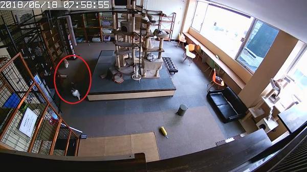 Phản ứng kích động của loài mèo trước khi xảy ra động đất mạnh ở Nhật Bản