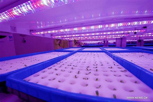 Mô hình trang trại mới của Trung Quốc có thể cung cấp thực phẩm cho 36.000 người