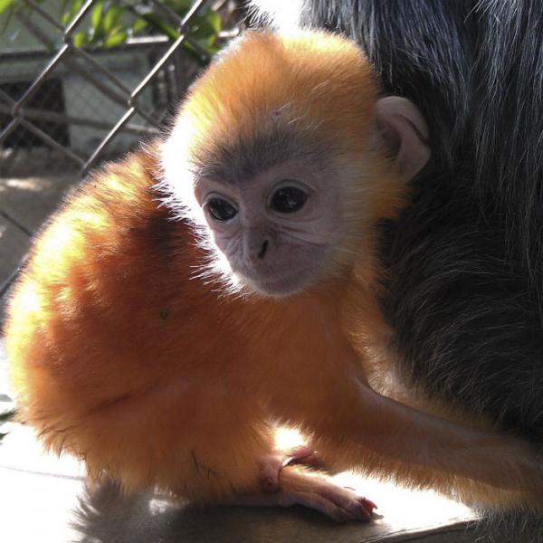 Nhân viên vườn thú tiết lộ 15 sự thật thú vị về động vật mà sách vở không đề cập đến