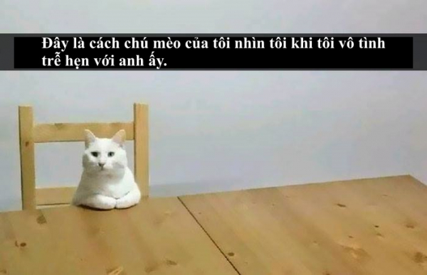 Loài mèo âm mưu thống trị thế giới, bắt đầu từ... Snapchat