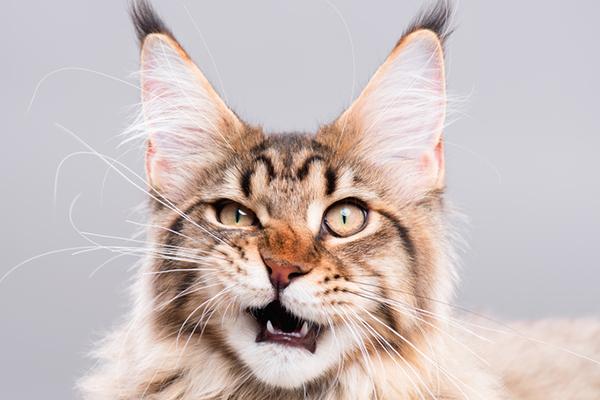 Bọn mèo thống trị thế giới lâu rồi, không tin hãy đọc thử xem!