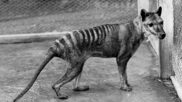 Hóa ra những sinh vật bạn nghĩ chỉ có trong tưởng tượng lại thực sự tồn tại trên Trái Đất
