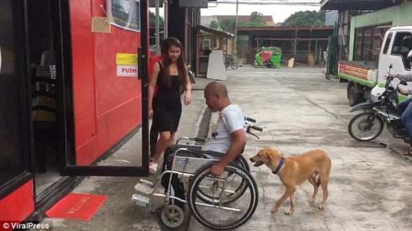 Lòng trung thành bất diệt của chú chó ngày ngày đẩy xe lăn cho chủ