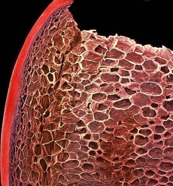 Hình dạng vạn vật dưới kính hiển vi là một thế giới khác bạn chưa hề biết đến