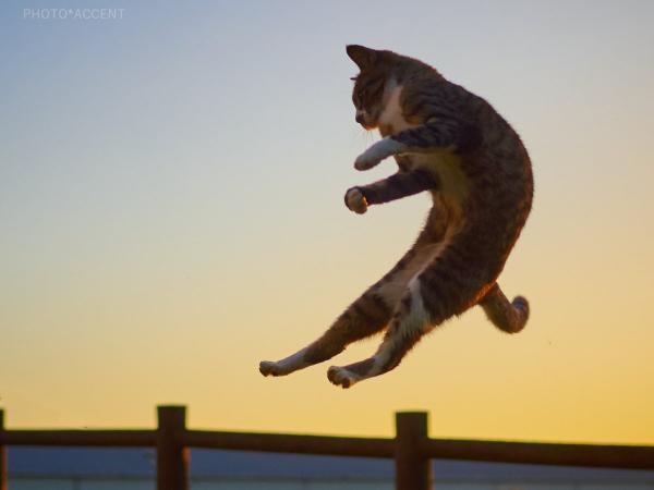 Loài mèo đang luyện tập ngày đêm để trở thành... Ninja