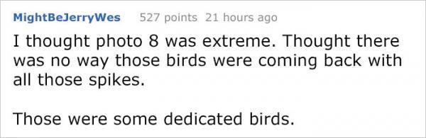 Hành trình giành giật nơi ở với... lũ chim của chàng trai trong suốt 4 năm